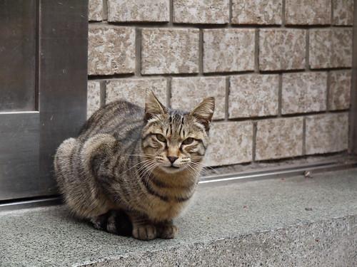 猫'豊島区