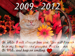 Tribute for Di Milo, my Smiling Kitty