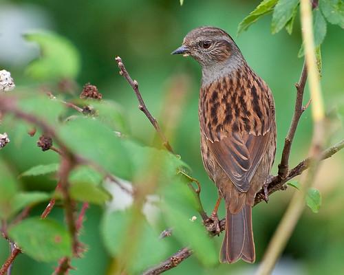 birds colours wildlife birdwatcher nikond90 avianexcellence alittlebeauty the~wonders~of~nature