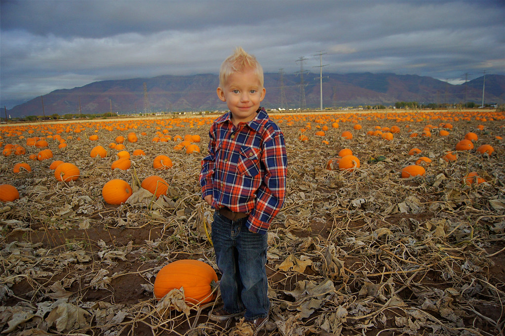 2012pumpkinpatch13
