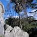 Sculpted Limestone and Palm Tree - Palma sobre piedra caliza; entre La Paz y Guadalupe Hidalgo, Región Mixteca, Oaxaca, Mexico por Lon&Queta