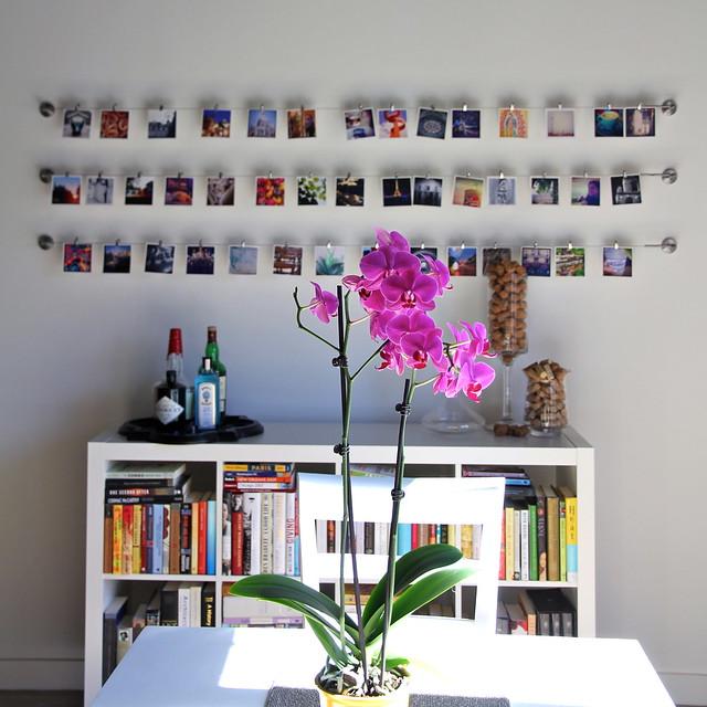 WaspyRedhead Instagram Gallery Wall