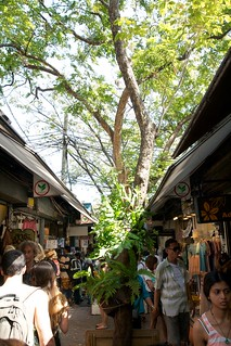 Image of Chatuchak Market near Charoen Pokphand Foods (CPF) Plc. Co. Ltd.. bangkok 曼谷 canon400d canon1755f28isusm
