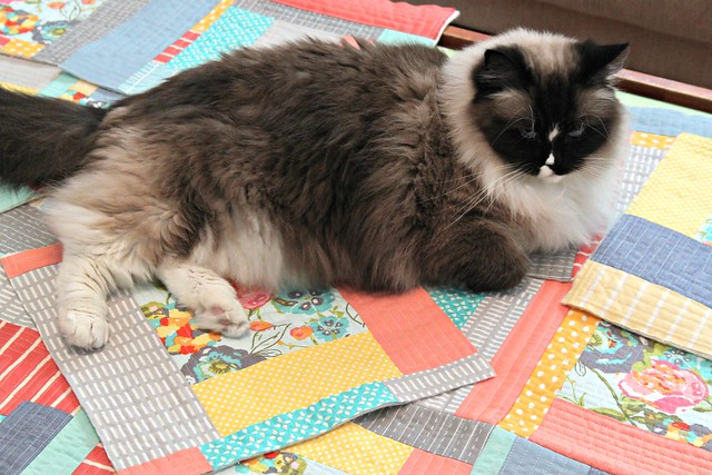 Someone's decided this quilt is hers!