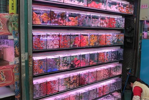 Regenboog aan tropische vissen