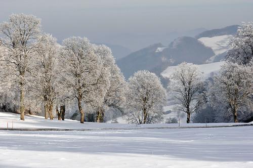 "winter snow nature forest landscape switzerland frost country jura "" delémont photosandcalendar natureselegantshots treesdiestandingup ""greatshotss"