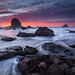 The Starfish Congregation by Willie Huang Photo