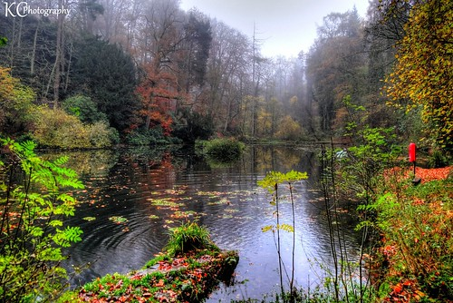 misty rain raining moody abbotspool pond lake pool woodland woods forest trees abbotsleigh bristol northsomerset somerset england uk hdr sonydschx20v photomatixpro tonemapped