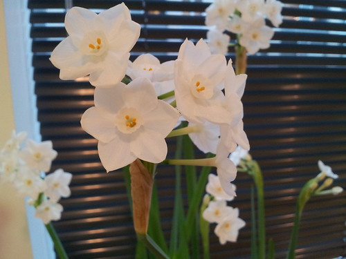 Office Paperwhites