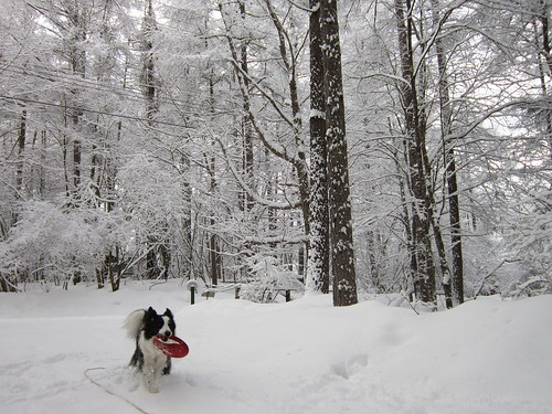 新雪の中のフリスビー 2013年月2月6日16:05 by Poran111