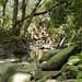 Road to Hana - Twin Falls Hike