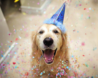Party Animal 41/52 #Flickr12Days