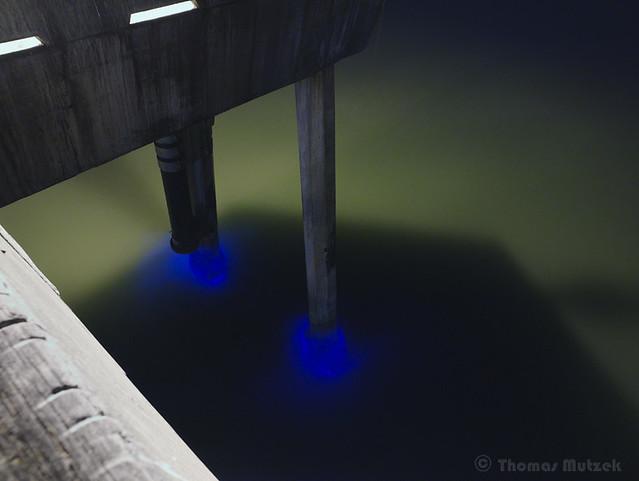 Bioluminescent Plankton, Pacifica Pier