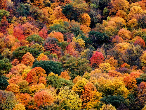autumn trees fall nature colors landscape woods hillside bluffland