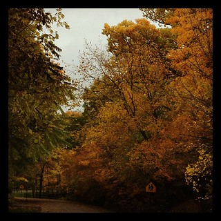 #leaves and #fall and #trees