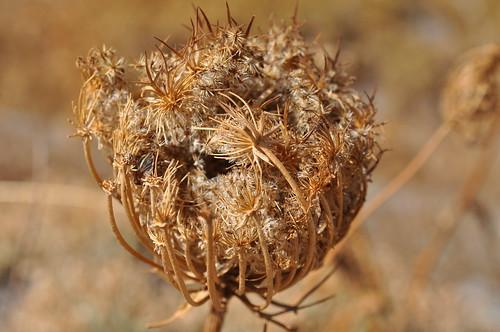 Ένα λουλούδι του αγρού by Anna Voulgari