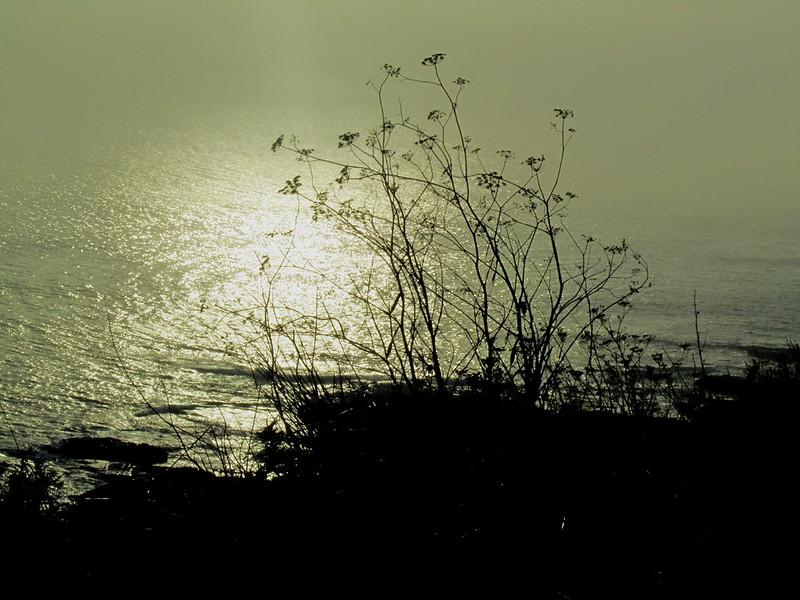 Foto art�stica en la costa atl�ntica