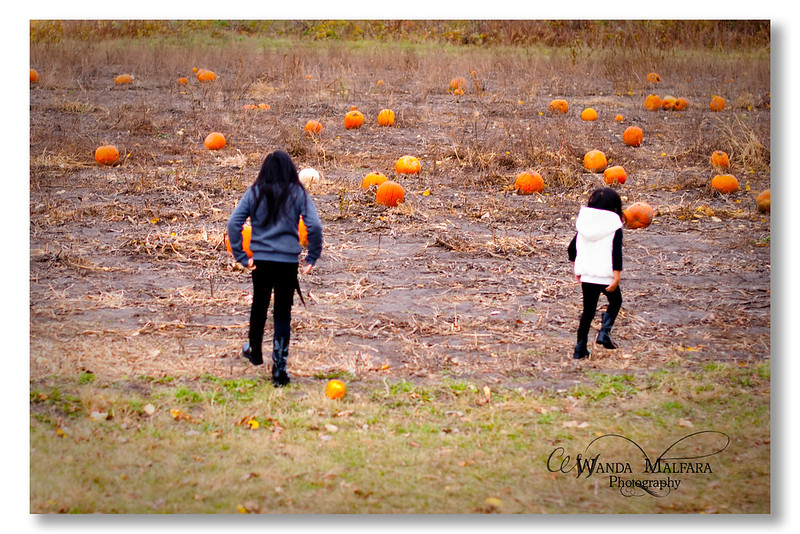 Pumpkin Patch 2012 001-2 wm