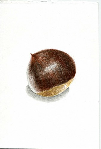 2012_10_22_chestnut_01 by blue_belta