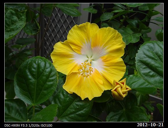 20121021_Flower1