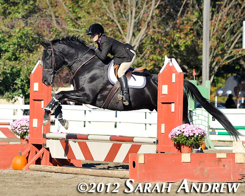 """Fall For Horses"" All-Thoroughbred Charity Horse Show at the Horse Park of New Jersey, hosted by Second Call Thoroughbred Adoption and Placement"