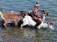 Mongolské střípky: Svérázná povaha obyvatel, jezero Chövsgöl, klášter Erdene Zuu, Ulánbátar