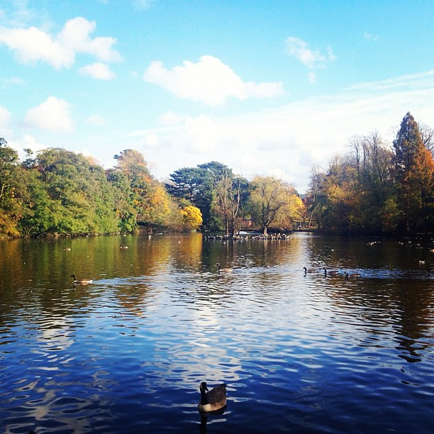 Cold but such a beautiful day for feeding the ducks. #fall #autumn #england