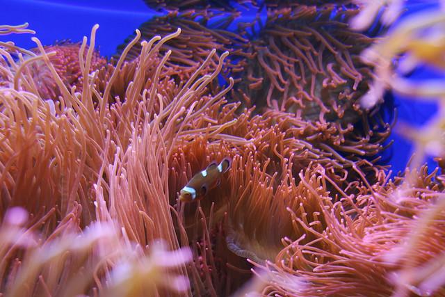 Fish at the Denver Zoo