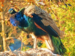 The magestic bird !!!