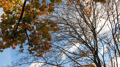 Looking up at the autum leaves and sky.  Elmwood Park Illinois.  Late October 2012. by Eddie from Chicago
