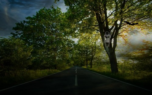 creepy road