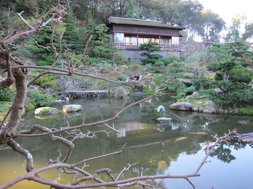 Hakone Japanese Gardens, Saratoga, CA, pond… IMG_2453
