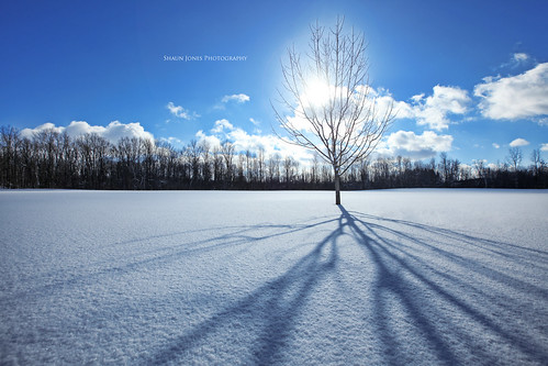 blue trees winter light shadow sky cloud sun sunlight snow tree nature beautiful clouds landscape landscapes pretty skies shadows snowing