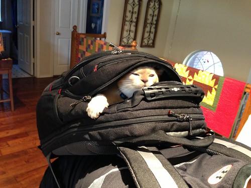 Smuggling Jack