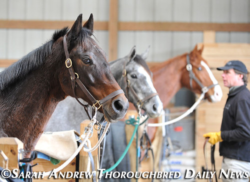 Retired Racehorse Training Project's 100 Day Thoroughbred Challenge: Steuart Pittman