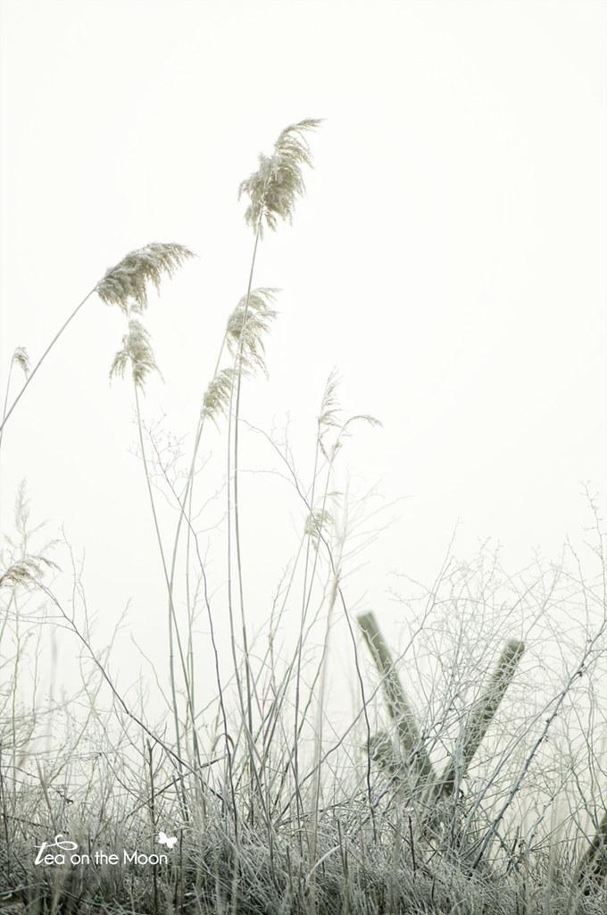 Niebla0