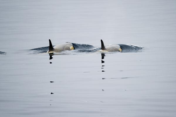 RYALE_Antarctica_Whales-5