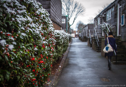 Day 14 of 365 - First snow of 2013 by Andrew Wragg