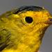 Kodiak Birds