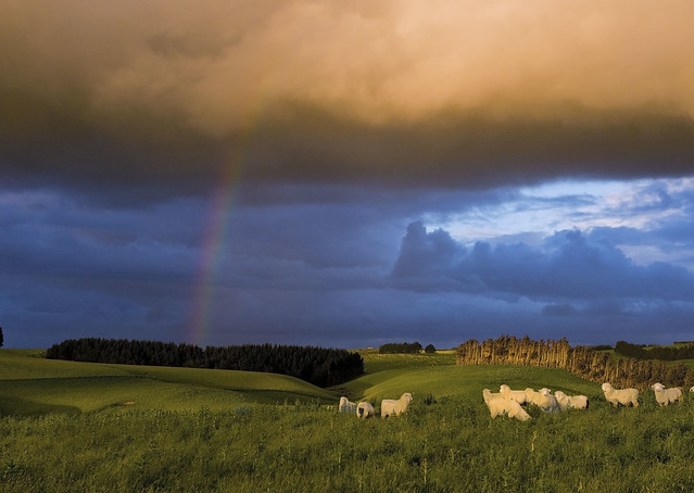 sheeprainbow copy