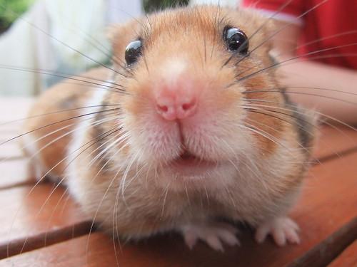 Hamster: hora do banho - Petlove - O Maior Petshop Online do Brasil