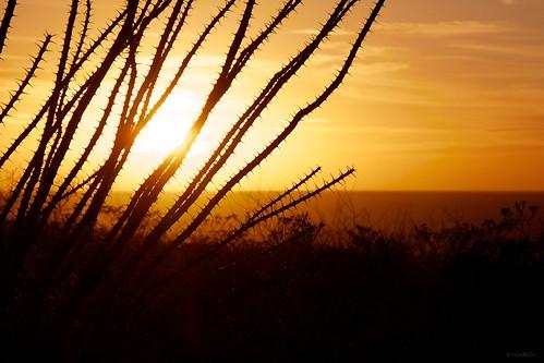 sunset texas desert elpaso thorns ocotillo franklinmountains