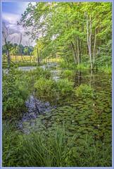 Tug Hill Beaver Pond