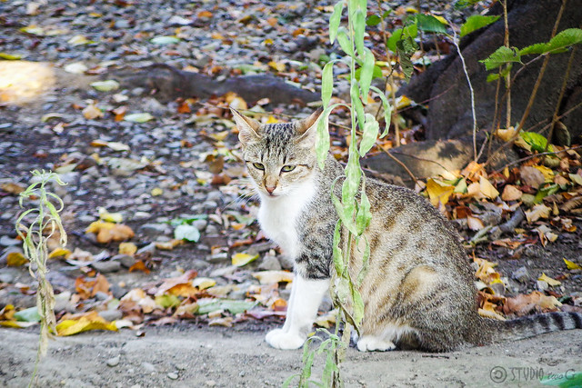 Today's Cat@2016-08-12