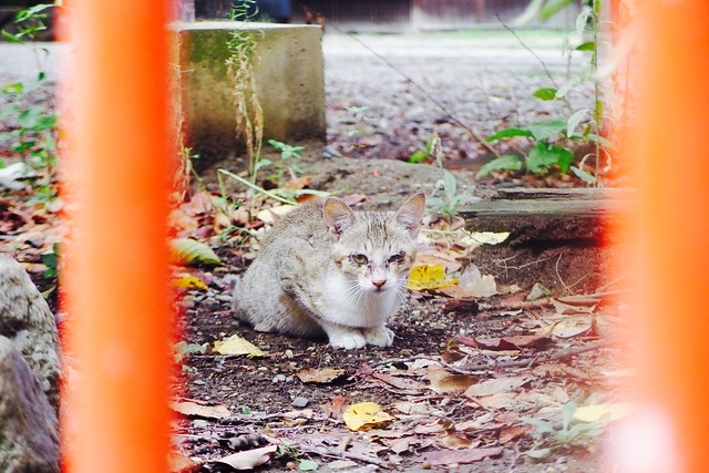 Today's Cat@2016-09-11