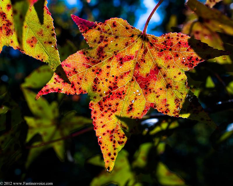 Leaves 10.10.12
