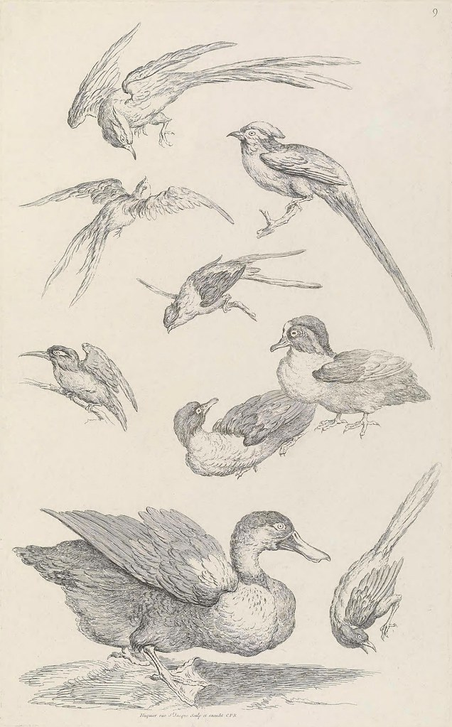 Chinese bird engravings by G Huquier 1730s (BHL)