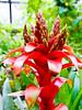 The Vivienne Westwood of botany