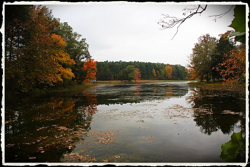 autumn red lake color fall forest reflections kentucky bernheim clermint