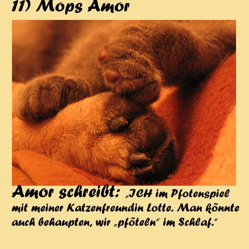 11-Mops-Amor